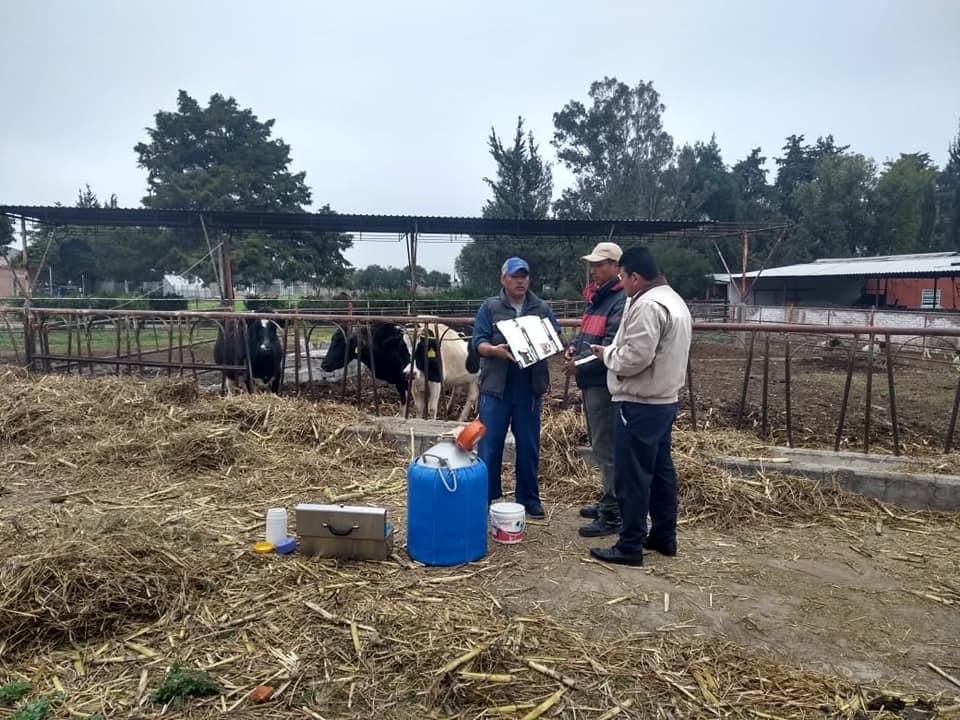 PROYECTA DESARROLLO AGROPECUARIO INSEMINACIÓN ARTIFICIAL A GANADO